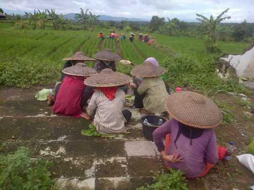 ibu2-kampung-dan-bapak2-petani-gbr-4